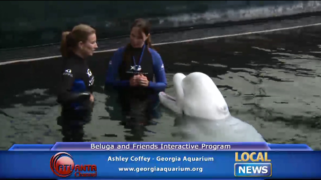 Beluga and Friends Interactive Program - Local News