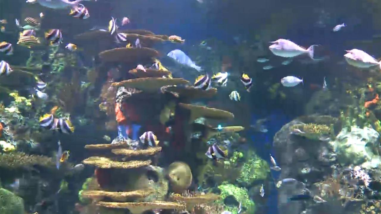 Rainbow Tank at Ripley's Aquarium - Did You Know?