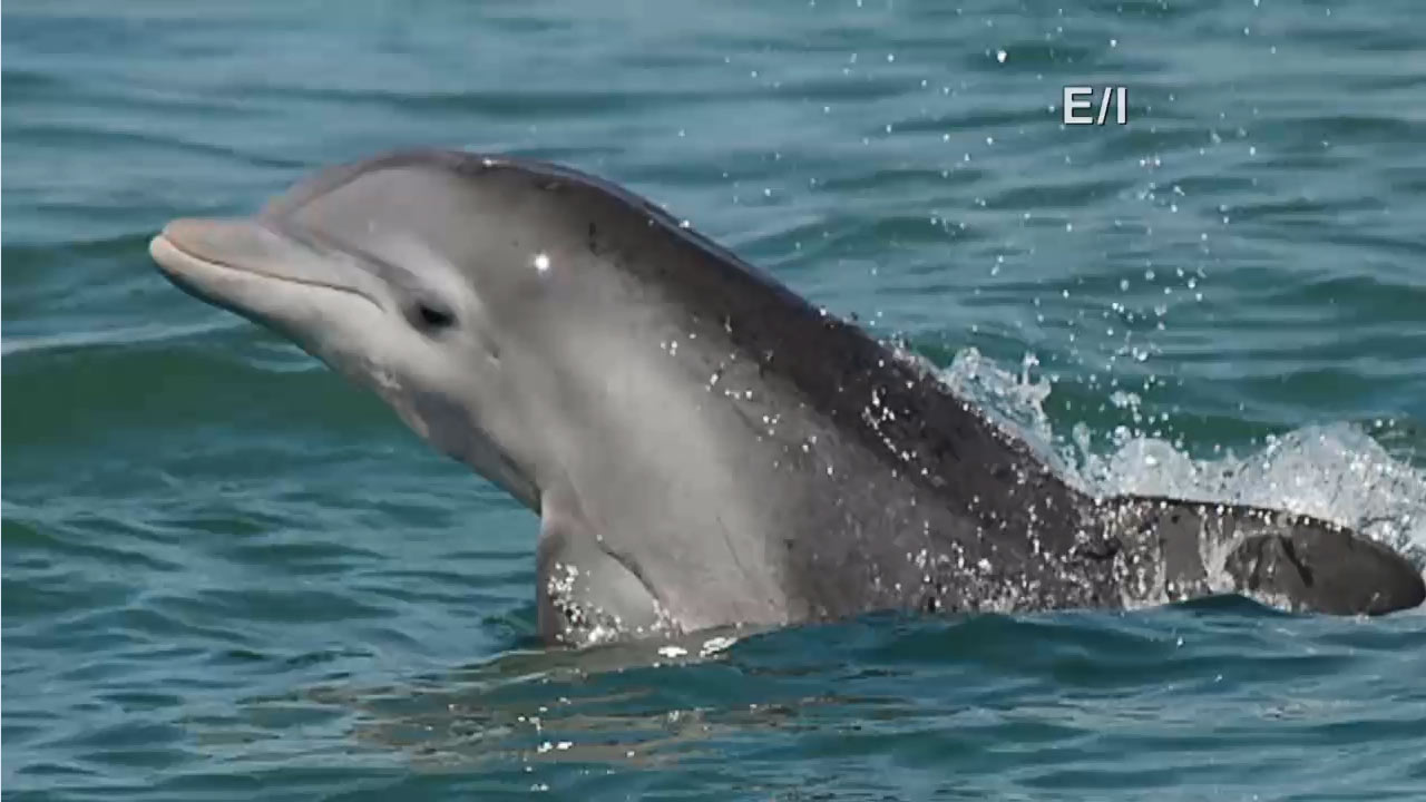 Physical Attributes of Dolphins - Kids on the Coast