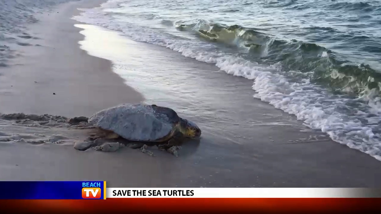 Save the Sea Turtles Leave No Trace Ordinance - Local News
