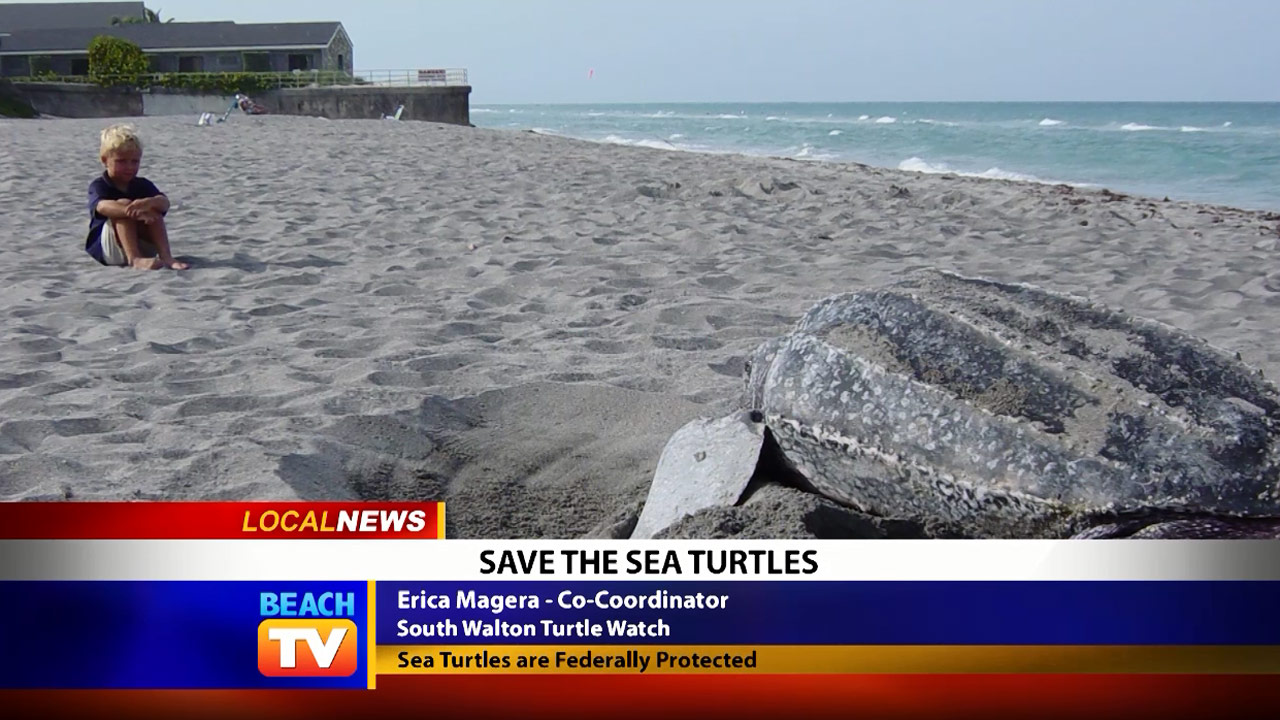 Save the Sea Turtles View Wildlife from a Distance - Local News