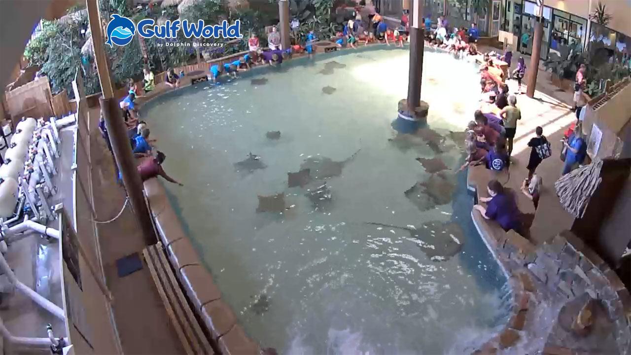 Gulf World Stingray Bay Live Cam