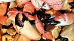 Stone Crab Season