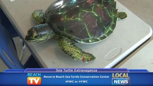 Sea Turtle Extravaganza at the Navarre Beach Marine Science Station - Local News