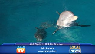 Baby Dolphin at Gulf World by Dolphin Discovery - Local News