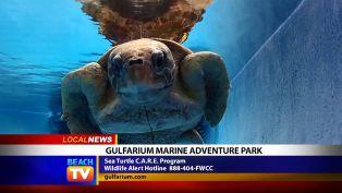 Gulfarium Marine Adventure Park - Local News