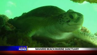 Navarre Beach Marine Sanctuary - Local News