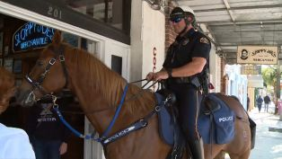 Key West Police Department Mounted Unit
