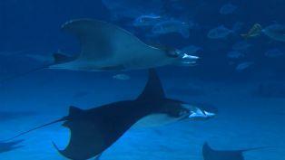 Georgia Aquarium Welcome