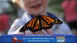 Flying Colors Butterfly Festival - Local News