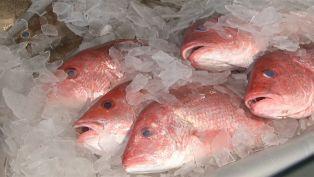 Tarpon Dock Seafood
