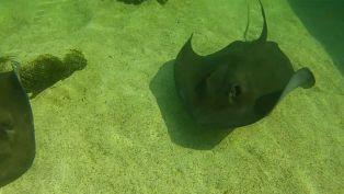 Allen McDowell from Gulfarium Marine Adventure Park - Did You Know?