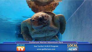 Sea Turtle CARE Program - Local News