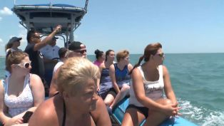 Dolphin Tours with Crazy Sister Marina - Did You Know?