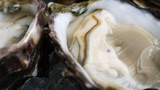 The Best Oysters Money Can Buy