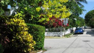Flora and Fauna - Key West in Fall