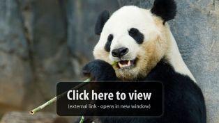 Zoo Atlanta Panda Cam
