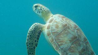 Turtles 'n Terns