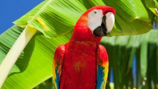 Winter Parrot Head Festival