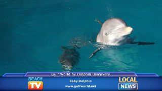 Baby Dolphin at Gulf World by...