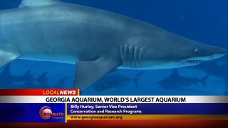 Georgia Aquarium, World's...