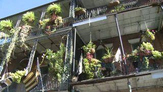 New Orleans Metropolitan...