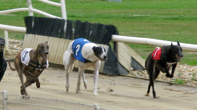 ebro dog track