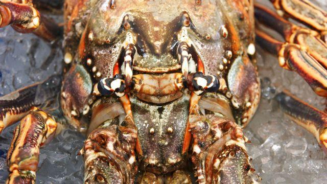 Florida Keys Lobster Season