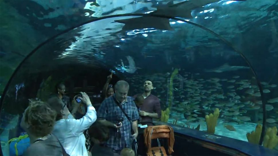Shark Tank at Ripley's Aquarium - Did You Know?