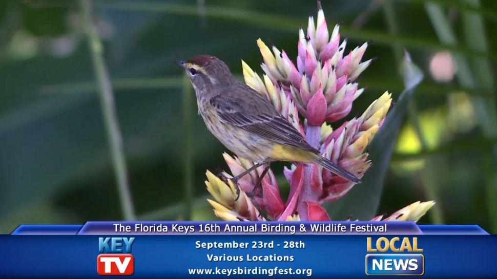 Keys Birding Festival - Local News