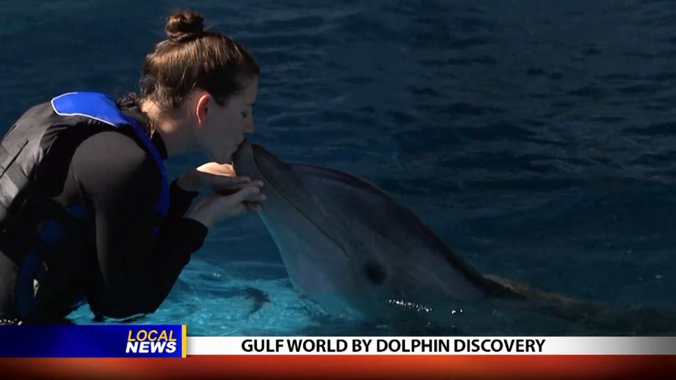 Gulf World By Dolphin Discovery - Local News
