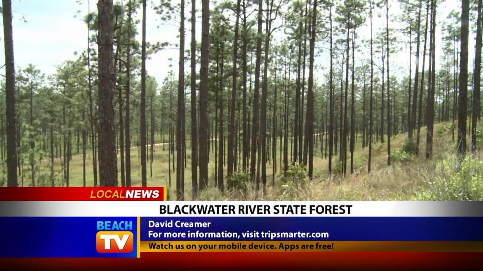Blackwater River State Forest - Local News