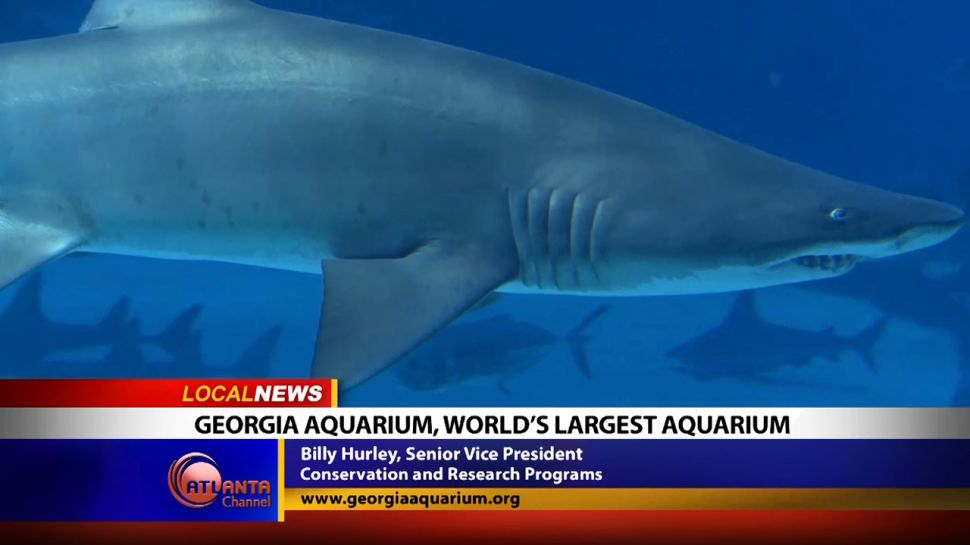 Georgia Aquarium, World's Largest Aquarium - Local News