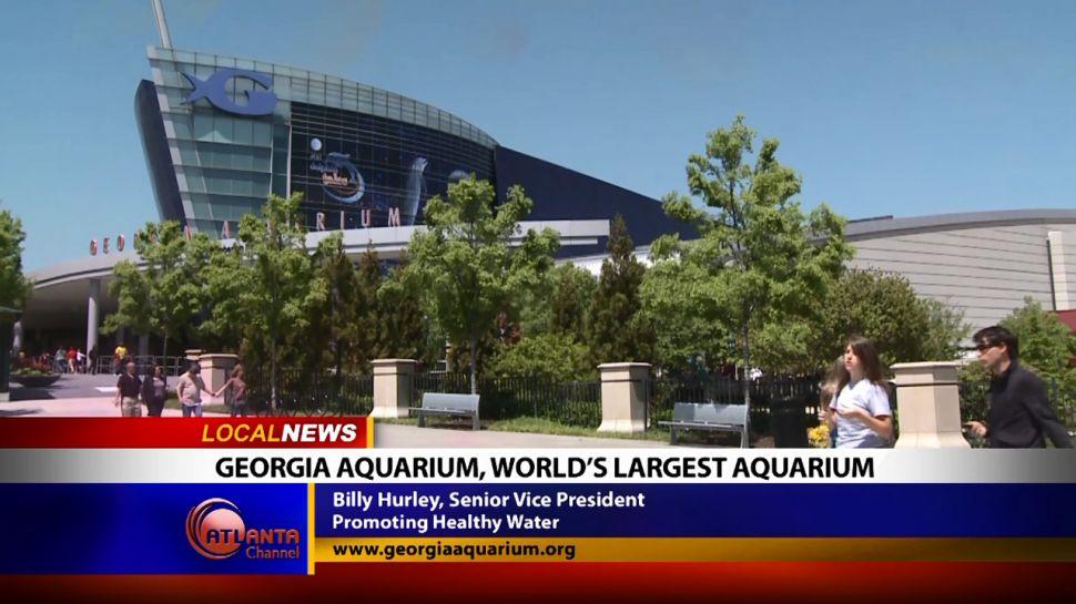 Georgia Aquarium - Local News