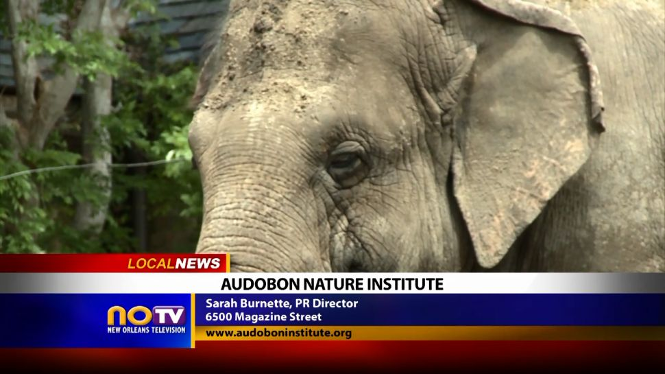 Audubon Nature Institute - Local News