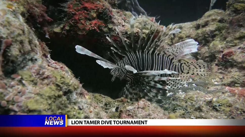 Chef Konrad Jochum at the Lion Tamer Dive Tournament - Local News