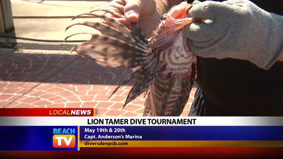 Chef Ronnie Barwick at the Lion Tamer Dive Tournament - Local News