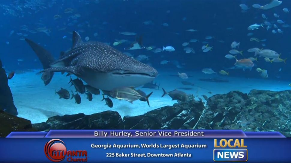 Georgia Aquarium's Best Exhibits - Local News