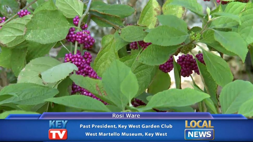 West Martello and Key West Garden Club - Local News