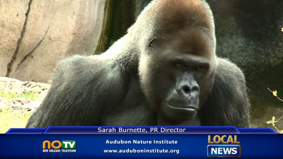 Audubon Zoo - Local News
