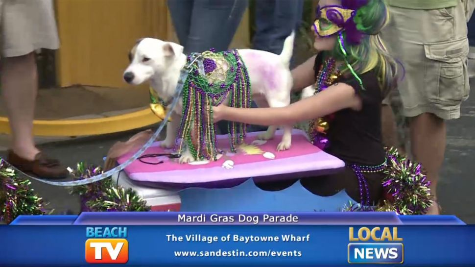 Mardi Gras Dog Parade - Local News