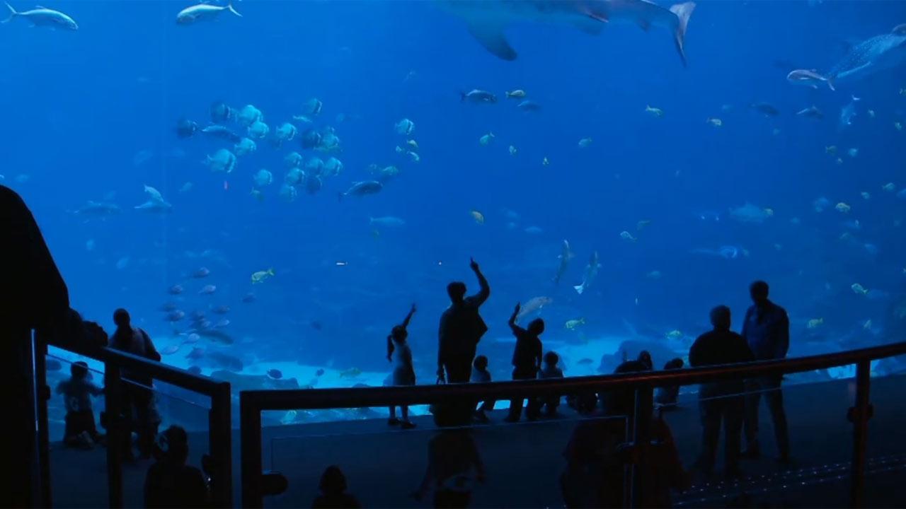 Georgia Aquarium - A Piece of Advice