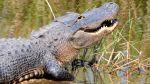Alligator Adventure in Myrtle Beach!