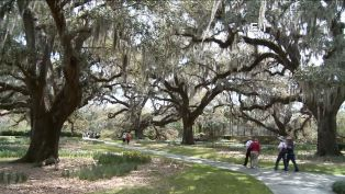 Brookgreen Gardens - Did You Know?