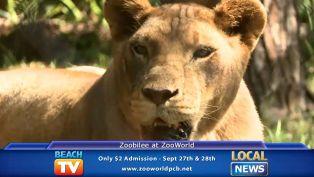 Zoobilee - Local News