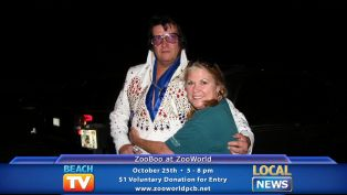 Zooboo - Local News