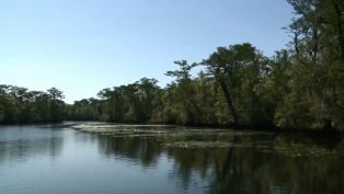 Waccamaw River Tours - Did You Know?