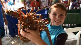 Schooners Lobster Festival and Tournament
