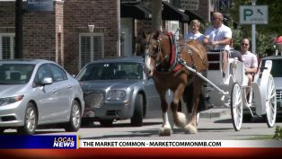 The Market Common's Carriage Rides and Movies Under the Stars - Local News