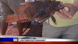 Pam Anderson at the Lion Tamer Dive Tournament - Local News